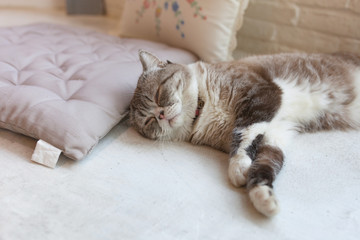 Cute little cat kitten sleeps