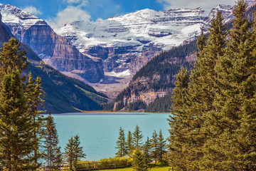 Flowers of glacial Lake Louise