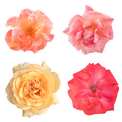 Set of rose photos, pink and yellow, isolated on white