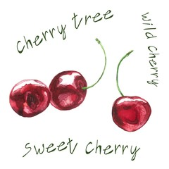 Cherries Realistic Watercolor Illustration with Lettering