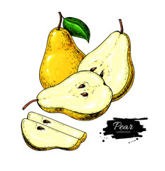 Pear vector drawing. Isolated hand drawn pear and sliced pieces.