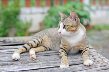Striped cat lying on wood ground