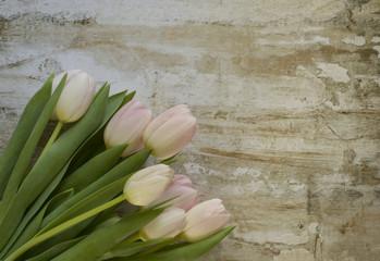 Blush Spring Tulips