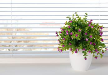 Beautiful home plant on windowsill