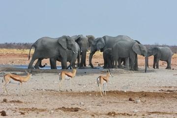 Elefanten am Wasserloch Okawao im Etosha Nationalpark