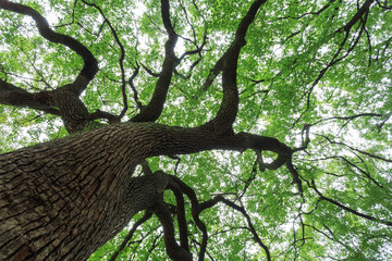 A big tree with luxuriant foliage
