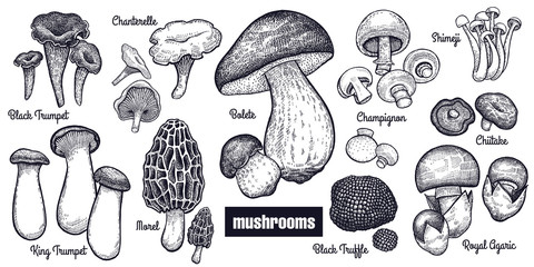 Vintage engravings mushrooms big set.