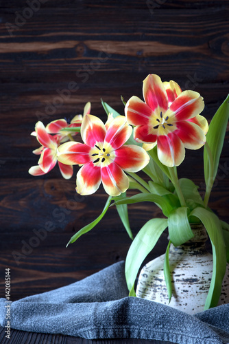 tulpen fr hlingsblumen schnittblumen stockfotos und lizenzfreie bilder auf. Black Bedroom Furniture Sets. Home Design Ideas