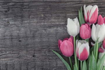 Frame Of Purpleviolet Tulips On White Rustic Wooden Background