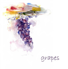 Watercolor grape. Vine hand drawing illustration. Abstract illustration of grape.