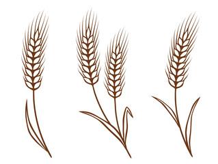 isolated wheat ears set
