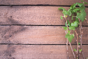 Branches of plants with leaves on a wooden background