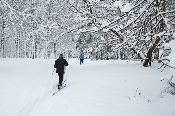 Skiers now run skiing in the Park after a snowfall. The trees are covered with fluffy snow. A winter sport. A healthy way of life.