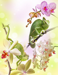 Wall Mural - chameleons on an orchids
