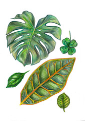 Illustration green leaves on white background, made watercolor . on white background