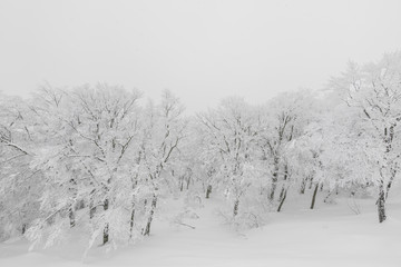 Tree covered with snow  on winter storm day in  forest mountains .