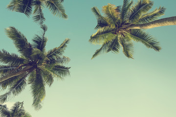 Palm coconut tree over sky background, Vintage filter effect, copy space