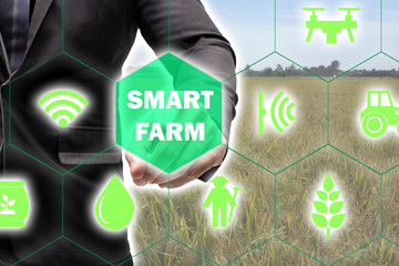 Wall Mural - iot,Internet of things(agriculture concept),smart farming,industrial agriculture.Farmer point hand to use augmented reality technology to control ,monitor and management in the field