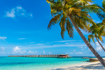 Beautiful tropical Maldives island, white sandy beach and sea  with palms tree around .