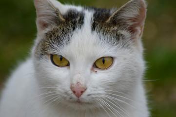 White cat eye macro photography
