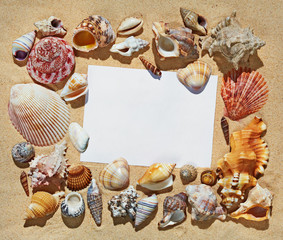 Frame with blank space made of colorful beautiful natural seashells on sand background on sea side shore