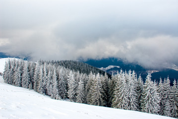 Dramatic wood in mountains after snowfall