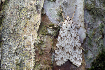 Brazilian moth sighted in remnant of Atlantic Rainforest