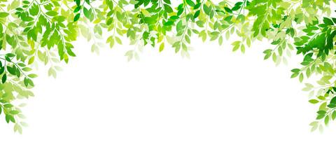 新緑 葉 緑 背景 Wall mural