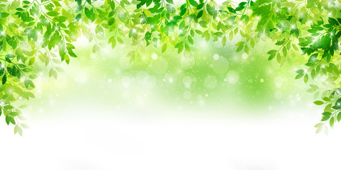 新緑 葉 緑 背景