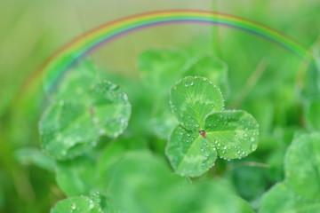 morning dew rainbow on clover