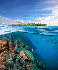 Foto auf AluDibond Unterwasser Hawksbill Sea Turtle exploring coral reef under water surface