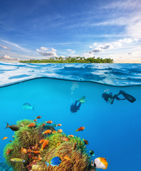 Divers below the water surface exploring sea life