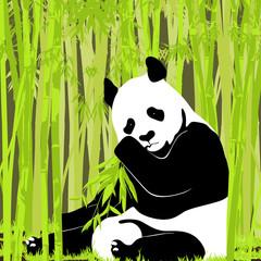 Sweet panda in bright foliage