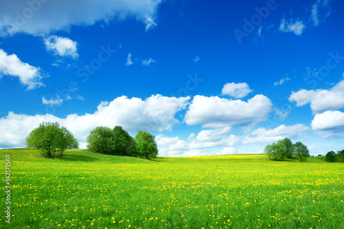 Wall mural Field with yellow dandelions and blue sky
