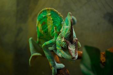 Creature in the terrarium