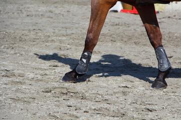 Jambes antérieures d'un cheval