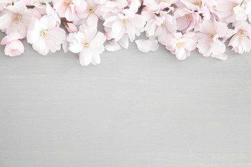 Floral background with cherry blossoms