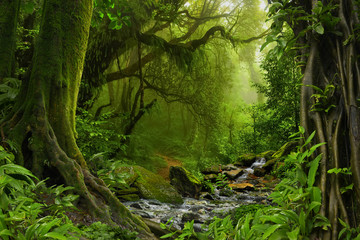 Poster de jardin Jungle Nepal jungle with river