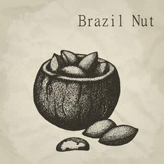 Brazil nut fruit, vintage engraved vector illustration.