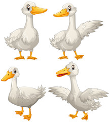 Duck in four different actions