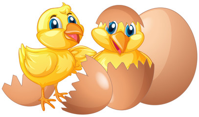 Two little chicks hatching eggs