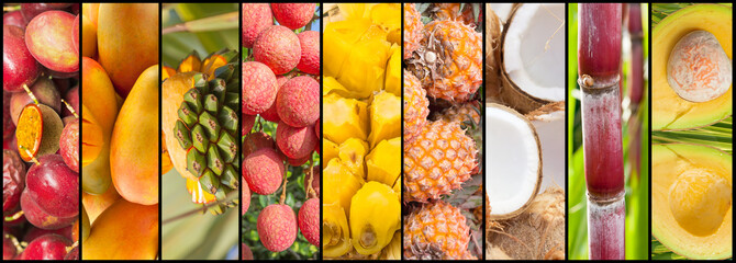 collage de fruits exotiques.