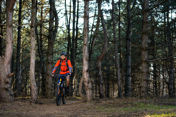 Cyclist Riding the Bike on the Trail in Beautiful Pine Forest. Healthy Lifestyle and Sport Concept.