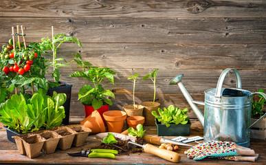 Planting seedlings in greenhouse