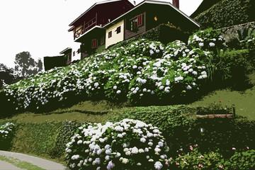 hydrangea white flower blooming garden wooden house  illustration