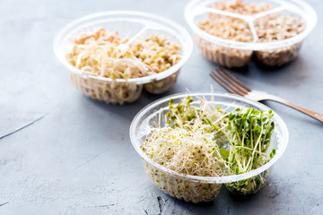 Various of sprouts in container Alfaalfa Radish Lentils Mung sprouts Healthy diet food
