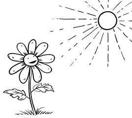 unflower look at  sun