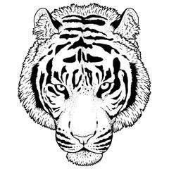 Tiger Head Illustration Vector