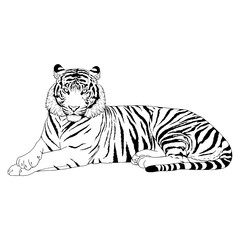 Tiger Head Illustration Vector