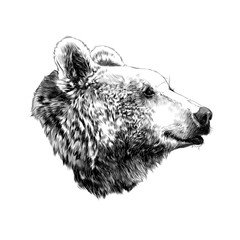 the bear's head profile looking into the distance, sketch vector graphics,  black and white  pattern